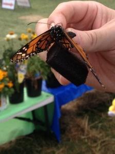 Feeding butterflies at the 4-H fair.